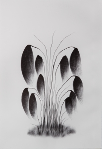 kasvit (1 of 1)
